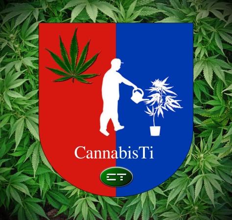 CannabisTi, Cannabis, Ticino